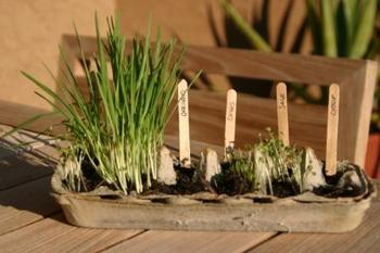 Plant An Herb Garden All Things For All Parties